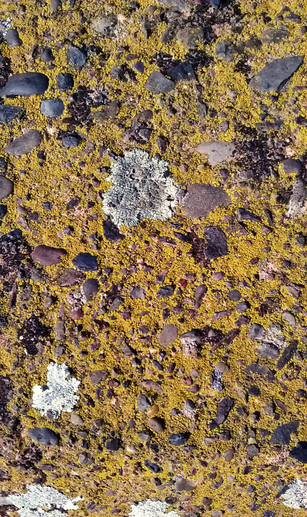 Concrete and Lichen