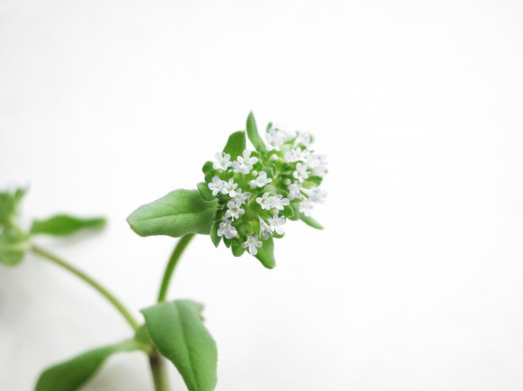 small-flowers
